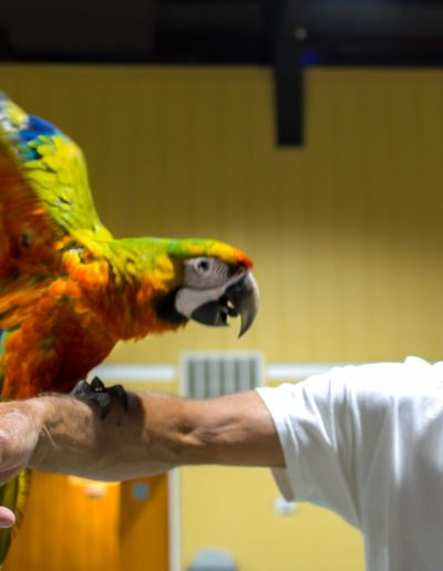 Parrot at the Gulf Coast Exotic Animal Expo
