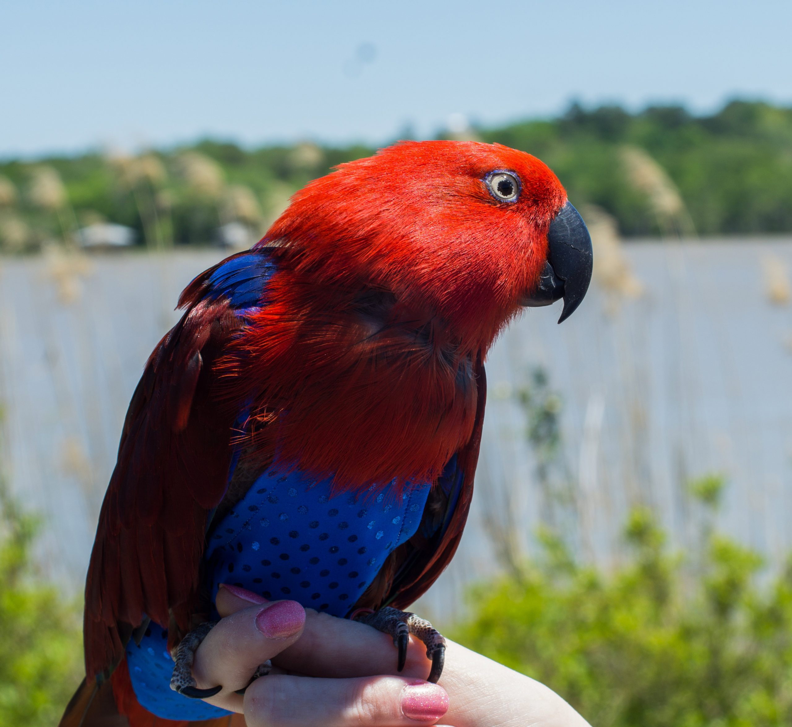 Parrot by the bay